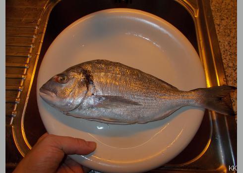 Beim Spülen wird noch reichlich Blut ausfließen. Das bedeutet nur, dass der Fisch frisch ist. Auch die Blutansammlung um das Auge ist positiv zu werten.
