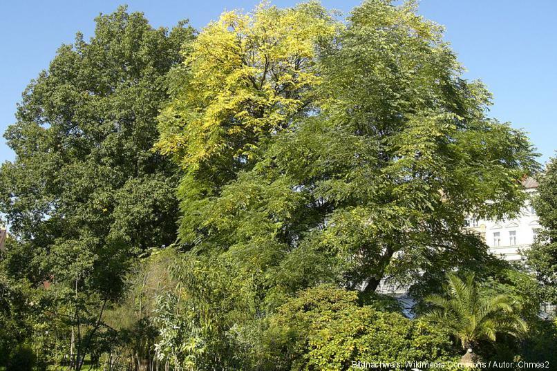 Botanischer Garten Der Prager Karls-Universität